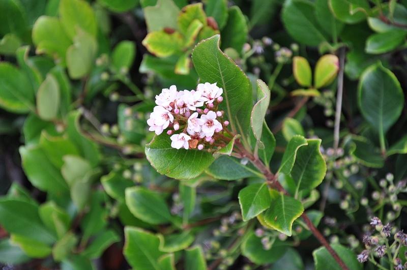 side walk flower