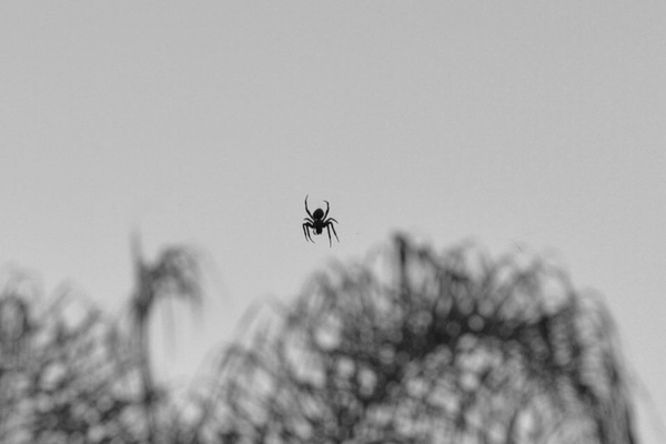spider by AceAbucayP1