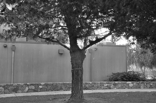 tree by AceAbucayP1