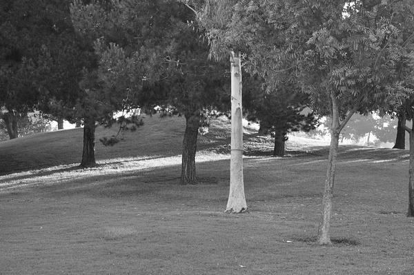 trees by AceAbucayP1