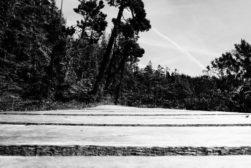 lake boardwalk