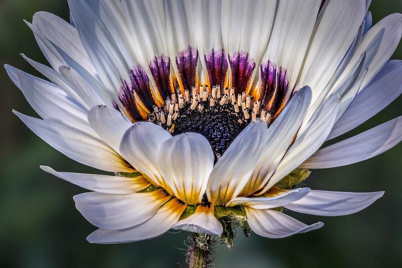 5 White Flower 5047 (5-8-13)