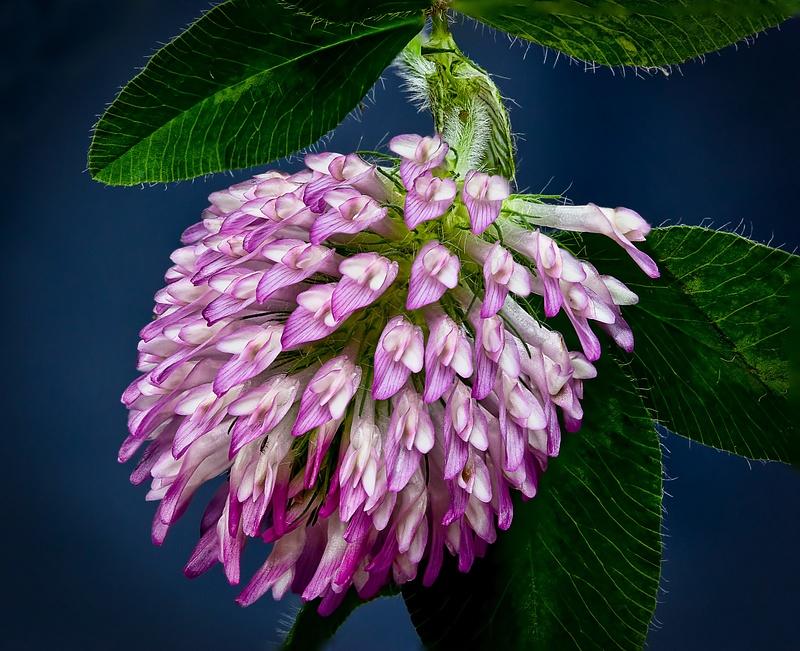 3 Flower 4374 Redo (7-15-12)