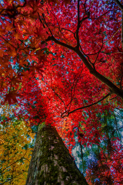 20151105_nikko_0083 by FotoClave Gallery