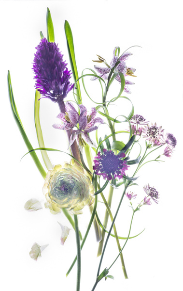 My Purple Garden by FotoClaveGallery