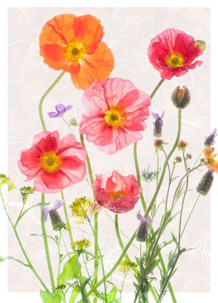Summer Garden by FotoClaveGallery