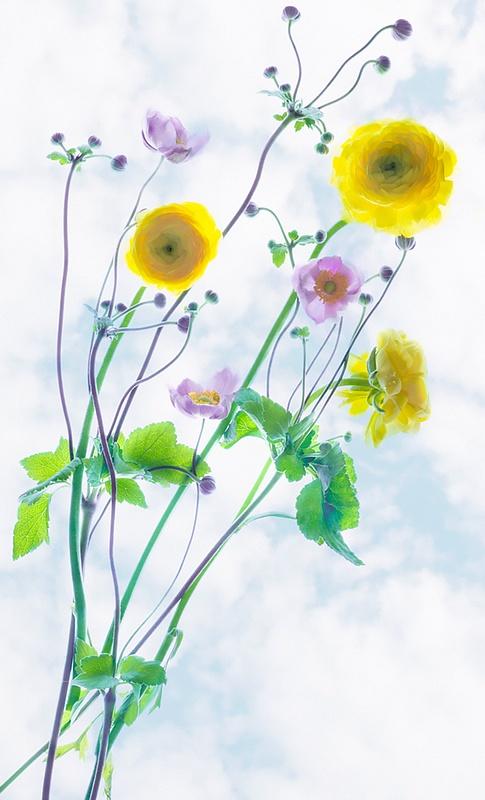 An Impromptu Bouquet