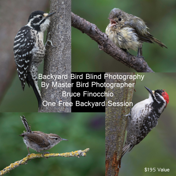 Backyard Bird Blind Photography by FotoClaveGallery