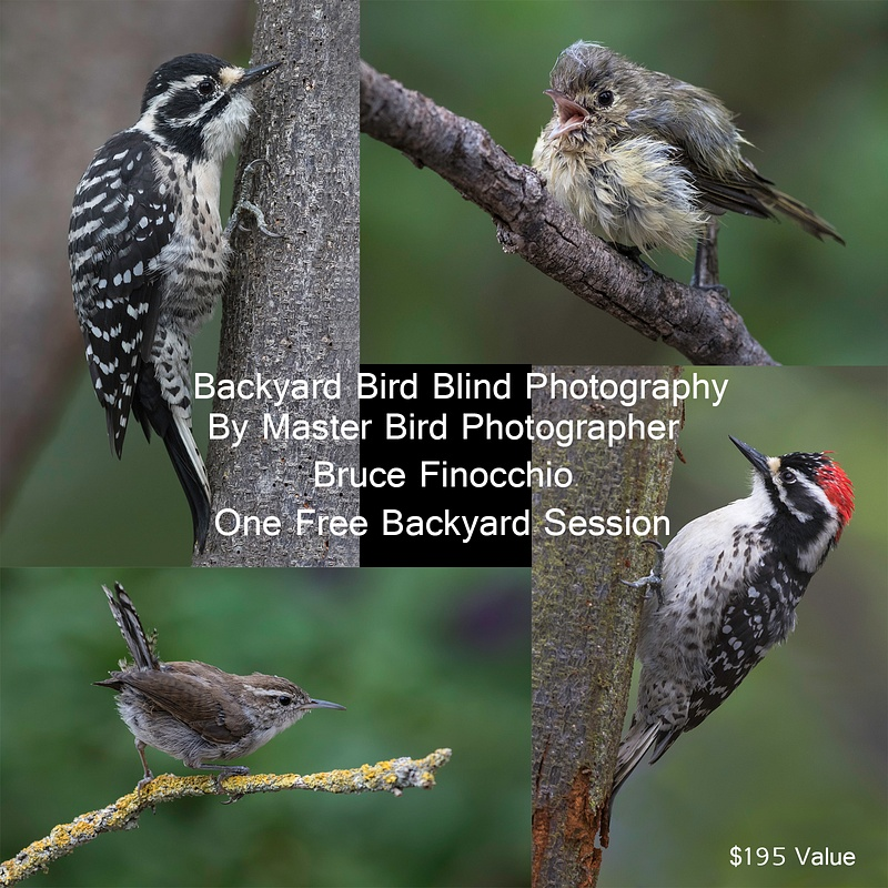 Backyard Bird Blind Photography