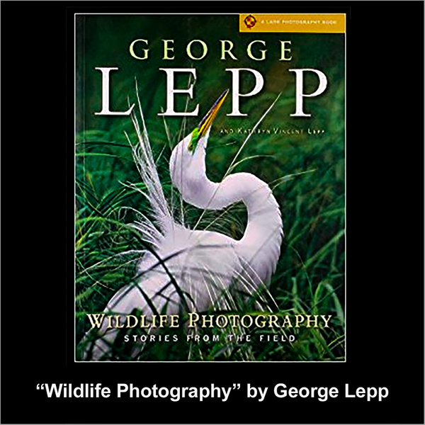 George Lepp Wildlife Photography by FotoClaveGallery