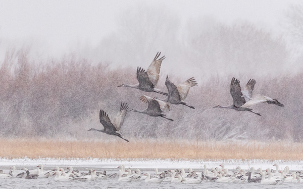 Snow Flight by FotoClaveGallery