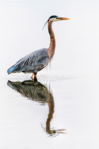 Feathered Friend by FotoClaveGallery