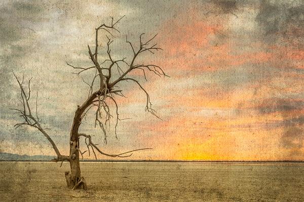 Salton Sea Desolation by FotoClaveGallery