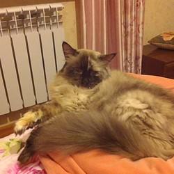 Dmitriy85192