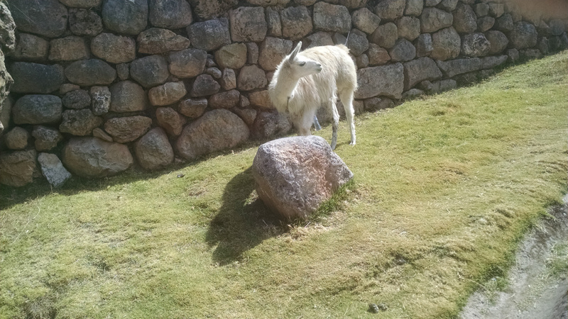in Cusco