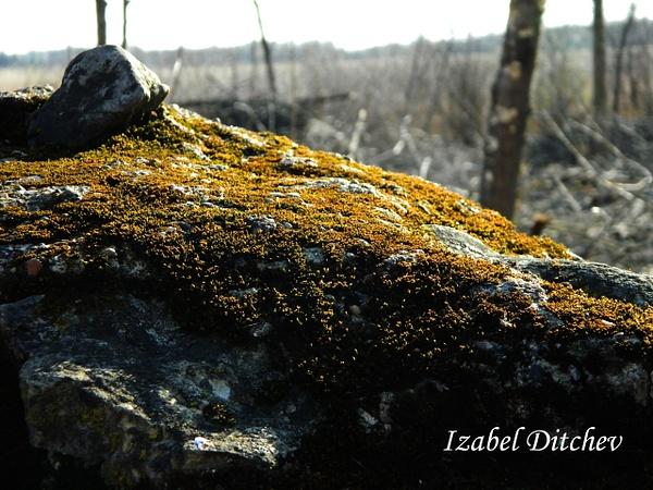 DSCN9724_edited-1 by IzabelDitchev