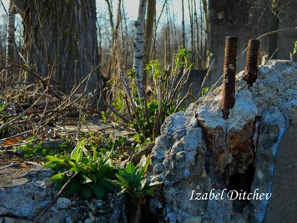 DSCN9727_edited-1 by IzabelDitchev
