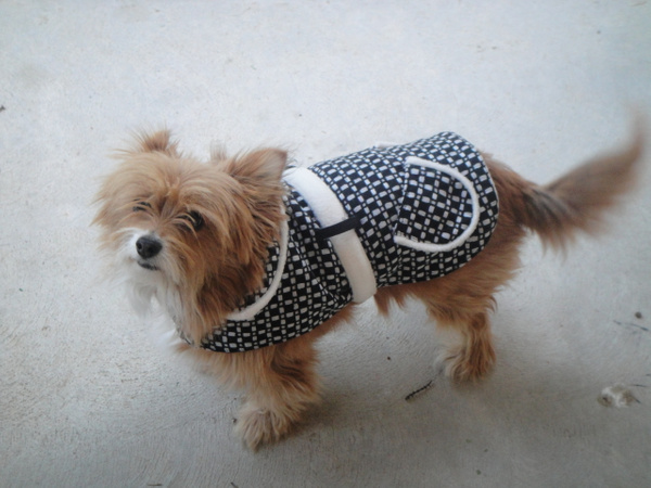 DSC00157 by PhillipWride