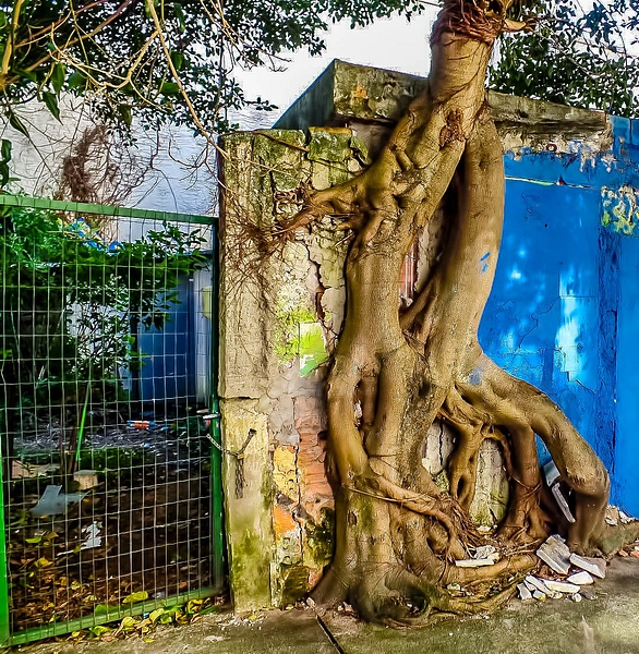 Tree in wall in the tree by WaldirHannemann