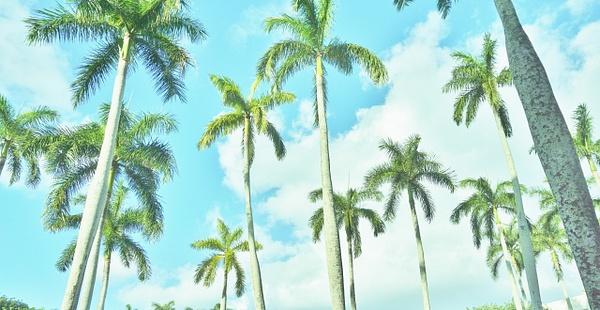Feeling Florida by MaggieJoy