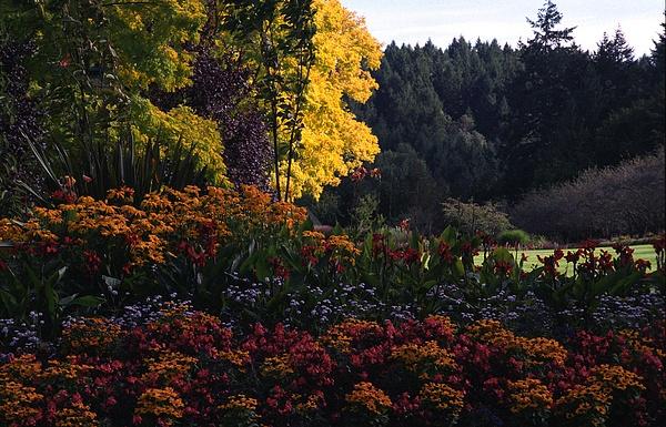 Butchart Gardens - 2001 by ArizonaLorne