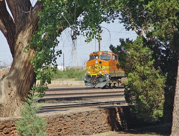 DSC09477_edited-1 by ArizonaLorne