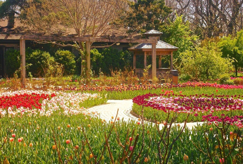 Blooms of Botanica