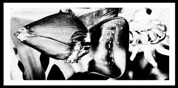 50-Tons-de-Cinza (335) by marcomachado