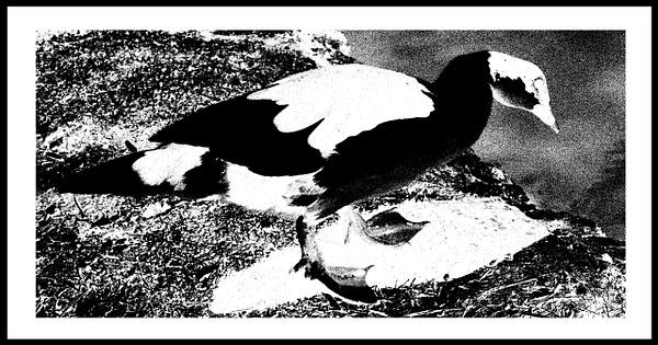 50-Tons-de-Cinza (358) by marcomachado