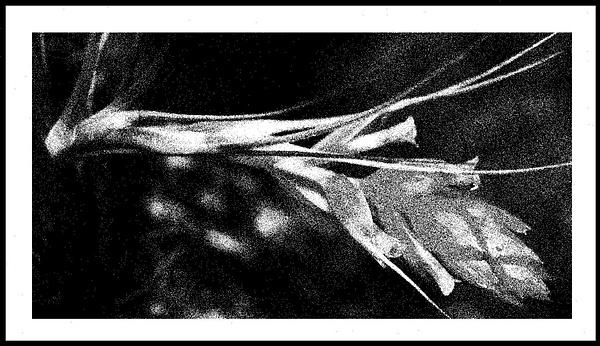 50-Tons-de-Cinza (369) by marcomachado