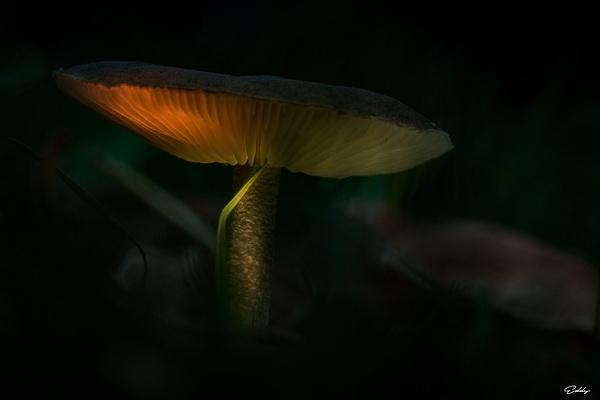 champignon_jardin by EddyVanhoeke