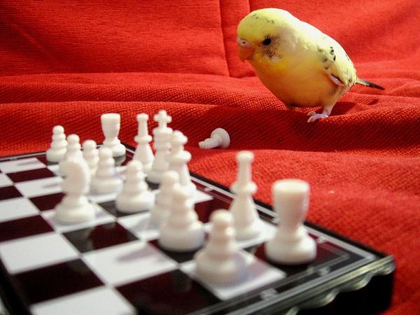 Pensive_Parakeet by SilverWatch