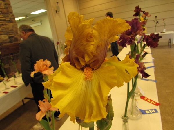 Iris Shows by utah-iris-society