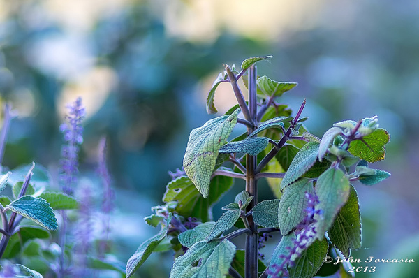 Plant Photography by John Torcasio
