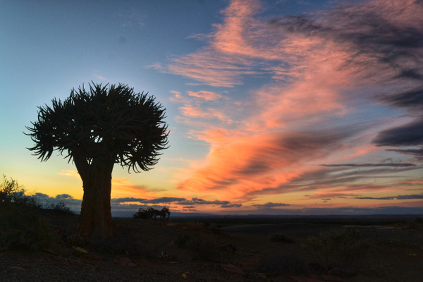 Quiver Tree sunset by Rene De Klerk