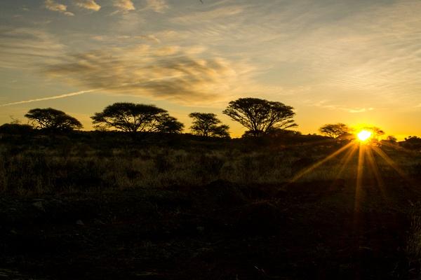 Sunset Mokala National Park by Rene De Klerk