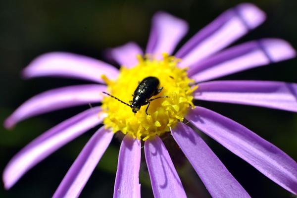 A bug's life by Rene De Klerk