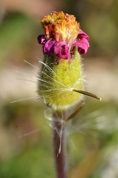 Pink flower by Rene De Klerk