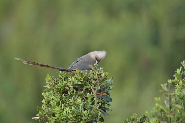 Go-away bird by Rene De Klerk