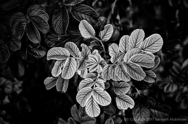 Leaves | Englewood, CO | August, 2017