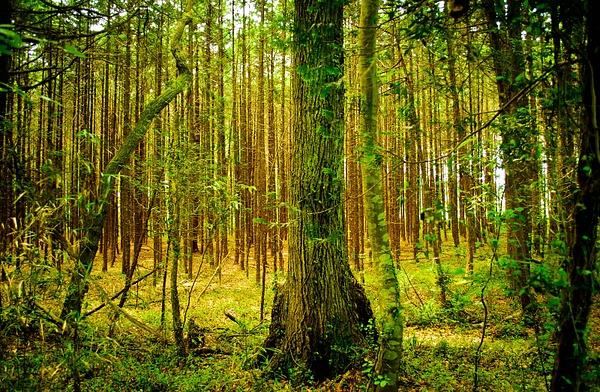 forest-park of utsunomiya 2
