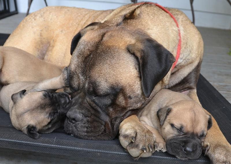 mum pups