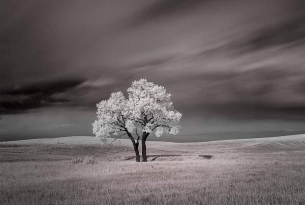 Lone Tree in IR