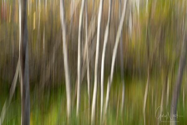 Birch Swipe