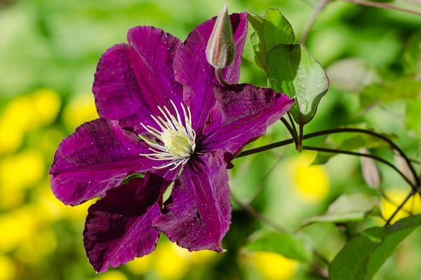 Flowers by Melkorusun