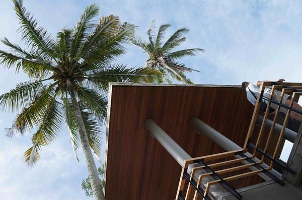 Entrance_palm_trees by VincentRobin