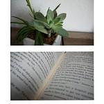 P1_Ho_Photo_Essay