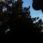 Silhouette_Guerrero_P5