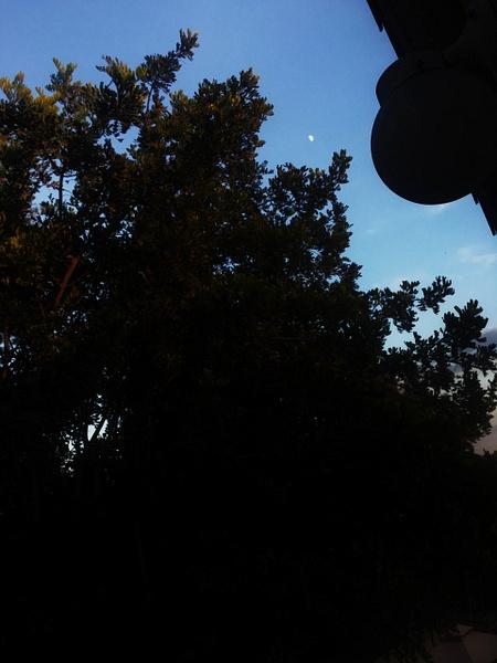 Silhouette_Guerrero_P5 by AnnabelGP5
