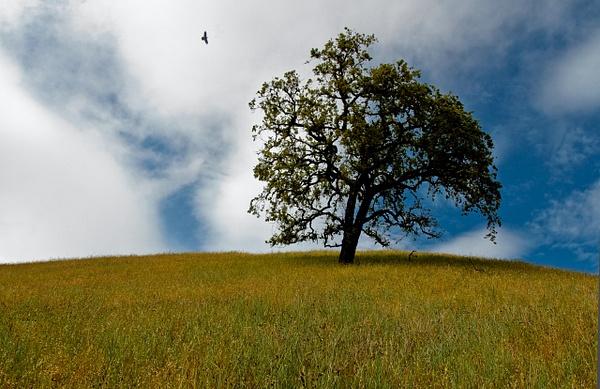 montebello_tree by MeetupPhoto